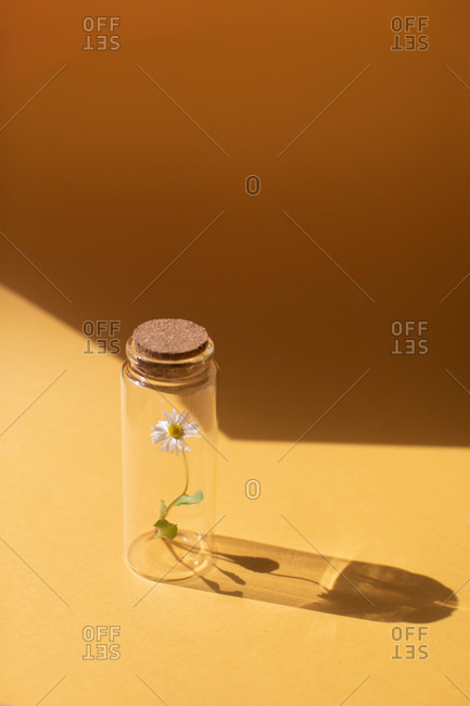 A single daisy flower in a glass jar with cork lid on yellow background