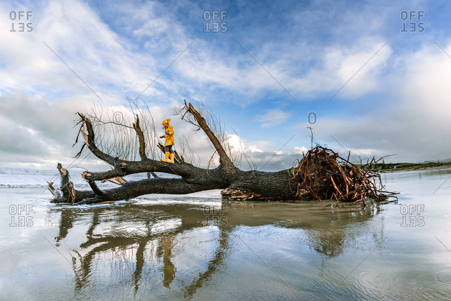 Girl climbing on large fallen tree in Hawke's Bay, New Zealand