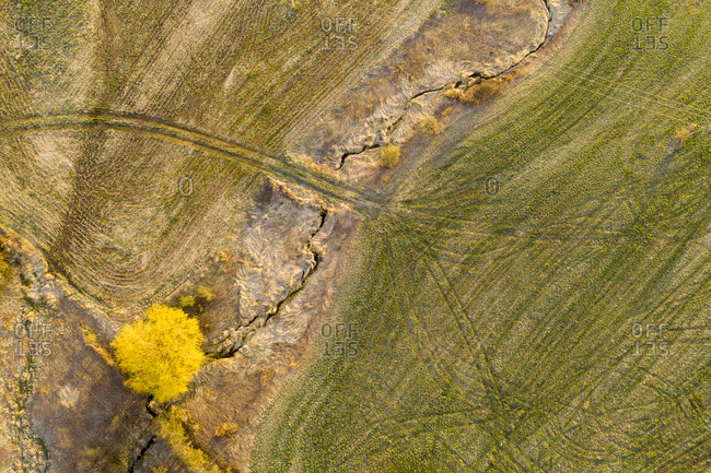 Aerial view of spring landscape of a willow tree and farm fields in Middlebury, Vermont