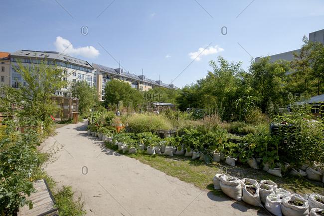 August 29, 2013: Urban Gardening, Prinzessinnengrten am Moritzplatz, Berlin Kreuzberg, Berlin, Germany