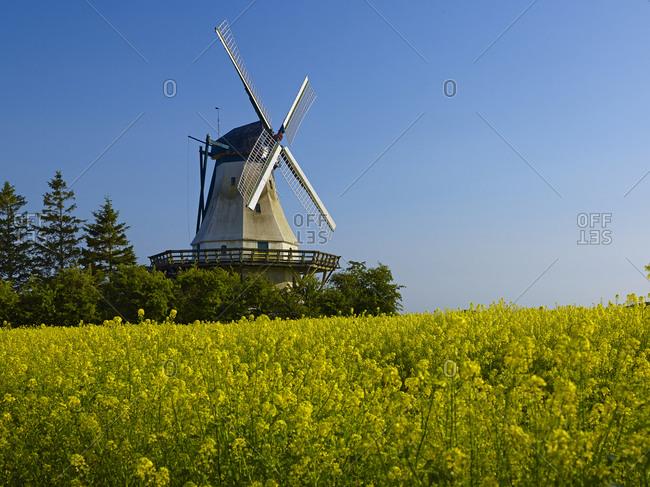 Windmill Fortuna, fishing in open air museum, Unewatt, Schleswig-Flensburg district, Schleswig-Holstein, Germany