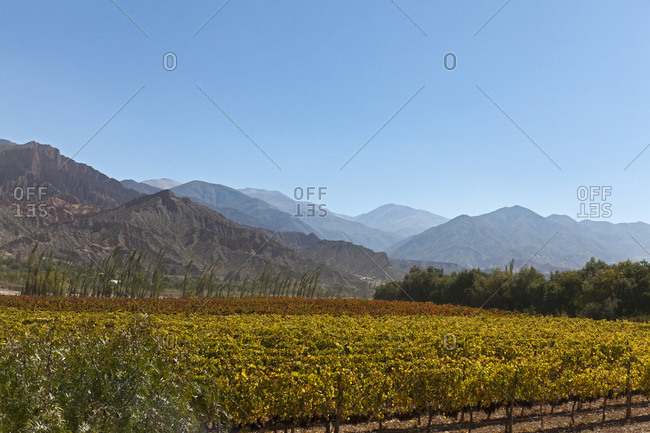 Wine growing in the Andes, Maimara, Jujuy, Argentina
