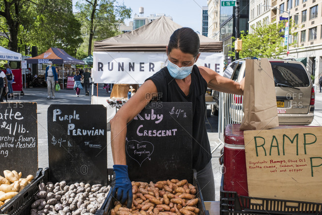 New York City, New York, USA - May 21, 2020: Farmer wearing a face mask   selecting and bagging potatoes for a customer Union Square Farmer's Market, New York City, USA.