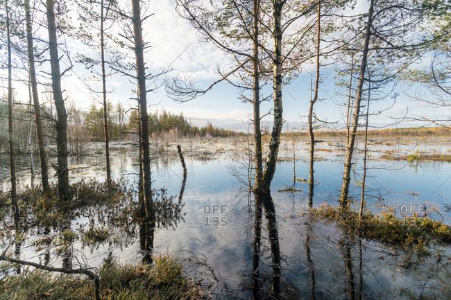 Lake at Viru Raba or bog swamp at Lahemaa National Park in autumn