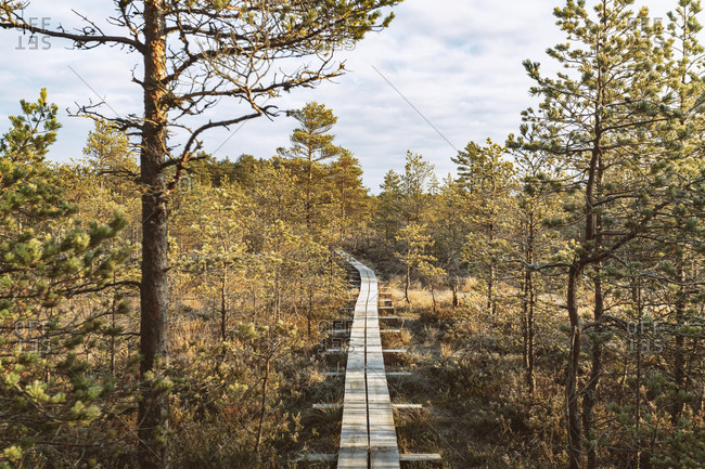 Walking track at Viru Raba or bog at Lahemaa National Park in autumn