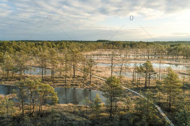 Aerial of Viru Raba or bog swamp at Lahemaa National Park in autumn