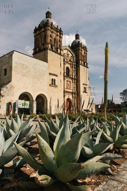 Oaxaca, Oax., Mexico - March 18, 2018: Rows of agave plants in front of the Church of Santo Domingo de Guzman