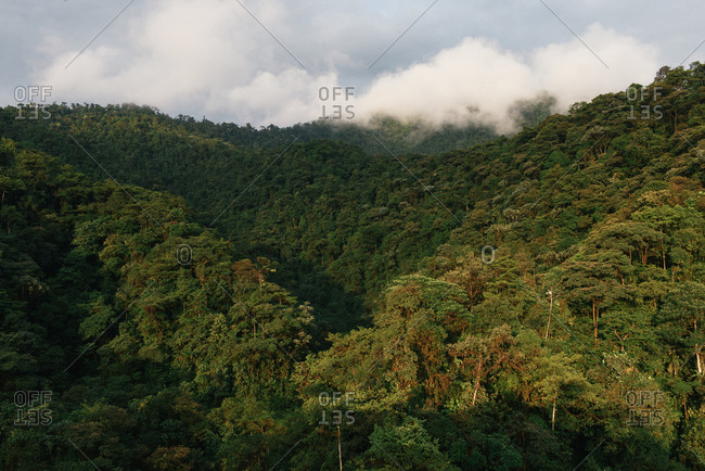 The rolling tropical hills of the Mindo Cloud Forest
