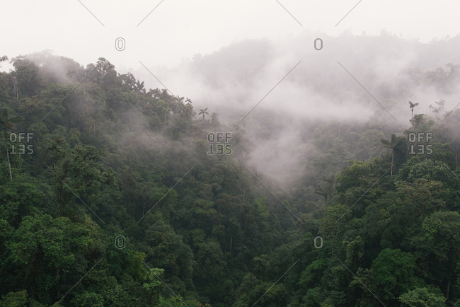 Mist envelopes the rain forest canopy in Mindo Cloud Forest