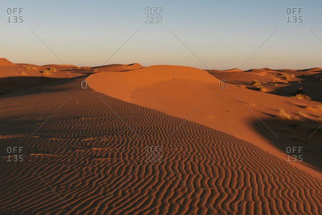 The barren dunes of the Sahara desert with golden glow from sunrise