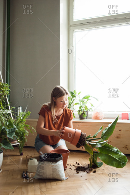 Woman takes plant of a pot, kneeling on floor with soil, garden tools.