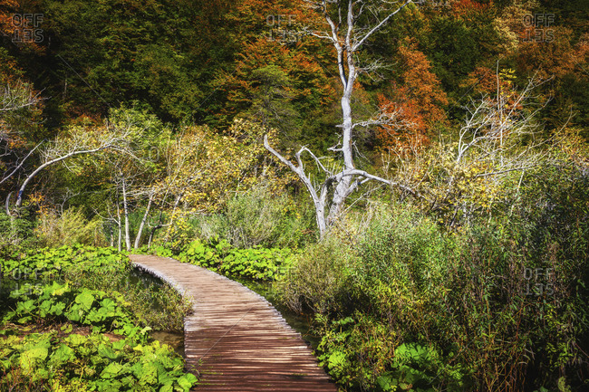 Croatia- Boardwalk across lush autumn foliage in Plitvice Lakes National Park