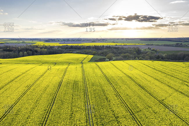 Germany- Brandenburg- Drone view of vast oilseed rape field at springtime sunset