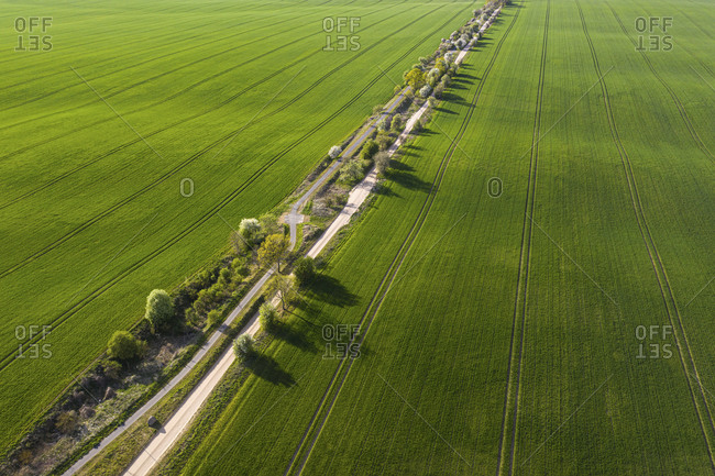Germany- Brandenburg- Drone view of countryside dirt road and vast green fields in spring