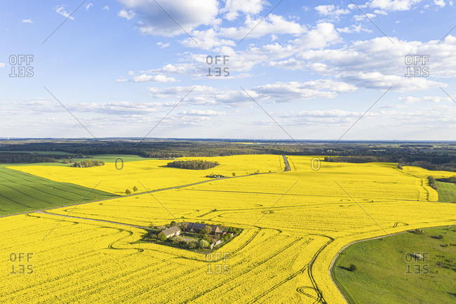 Germany- Brandenburg- Drone view of vast oilseed rape field in spring