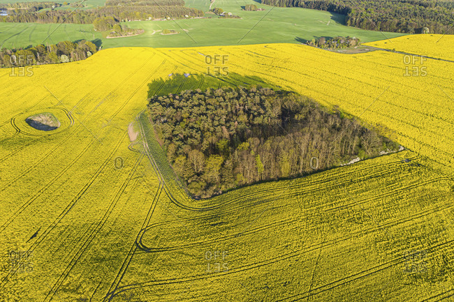 Germany- Brandenburg- Drone view of small grove in vast oilseed rape field in spring