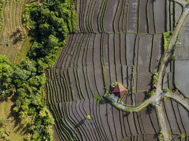 Indonesia- Bali- Aerial view of terraced rice paddies