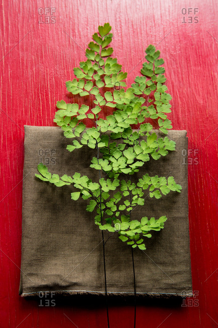 Two fronds of maidenhair fern sitting on a brown linen napkin on a red wooden tabletop