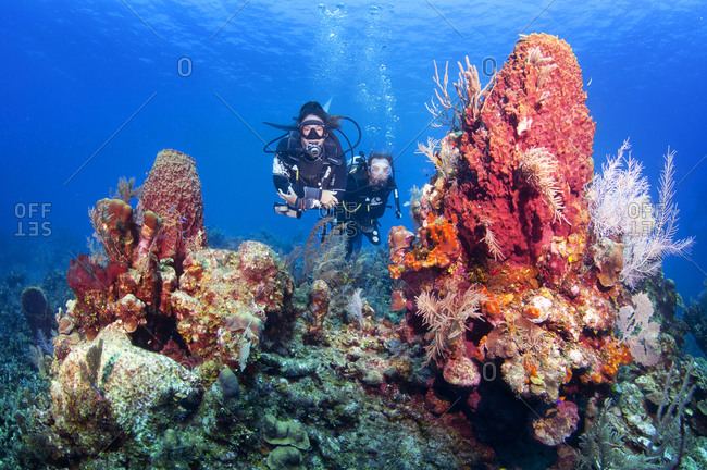April 3, 2018: Scuba divers swimming through colorful coral reef with giant barrel sponge (Xestospongia muta), Bay Islands (Islas de la Bahia), Honduras, Central America