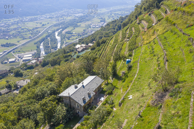 Farms on hills of terraced vineyards, Costiera dei Cech, Valtellina, Sondrio province, Lombardy, Italy, Europe