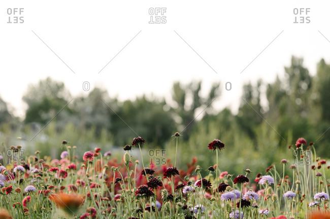 Colorful fresh flowers in a open field