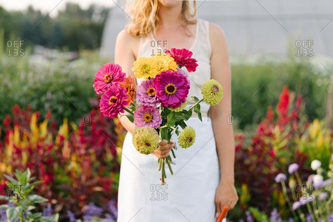 Caucasian woman holding a bouquet Zinnias flowers in a field