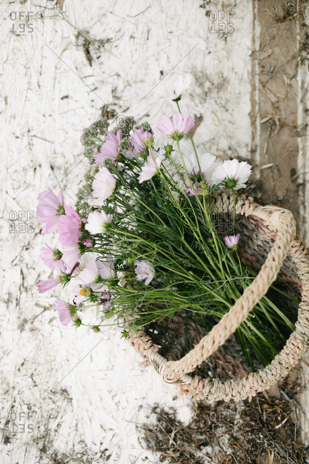 Cosmos flowers in a basket from above