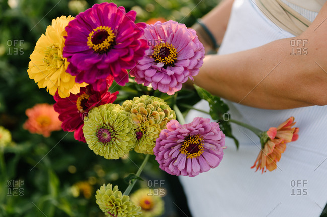 Close up of woman with a white apron collecting colorful flowers in a field