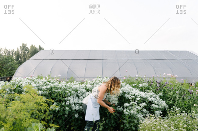 Caucasian woman collecting flowers in a field with a greenhouse behind