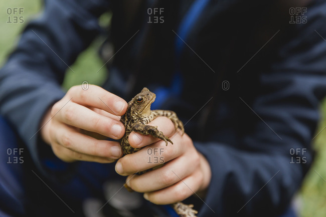 Boy's hands holding toad- Cairngorms- Scotland- UK