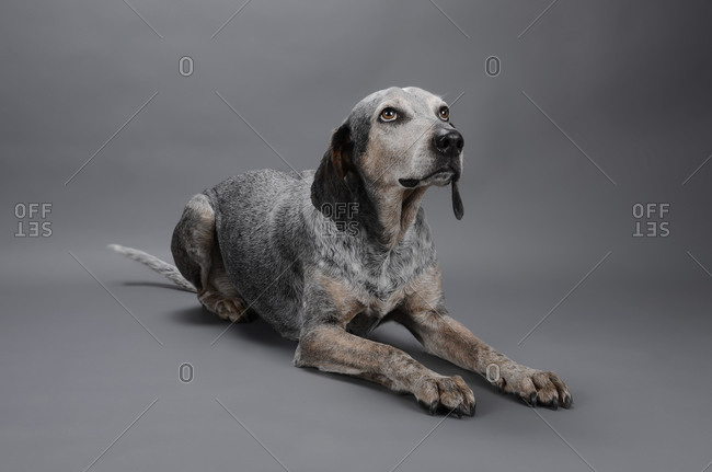 Mixed breed dog looking away