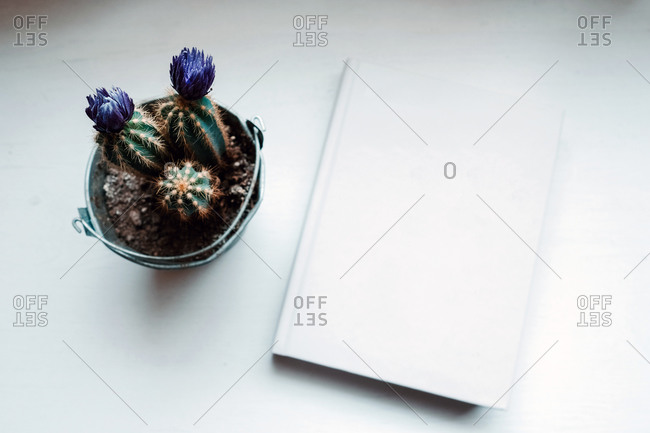 From above evergreen prickly potted flowers in composition with book on white table in light modern office