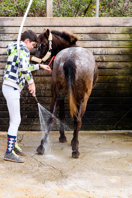 Teen boy using hose to wash coat of roan horse against wooden wall of stall after horseback riding lesson in equestrian school