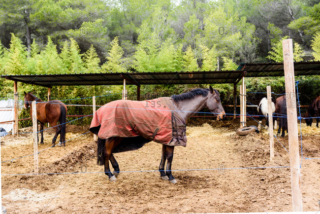 Brown horse in blanket standing near thread barrier in enclosure on ranch of equestrian school in countryside