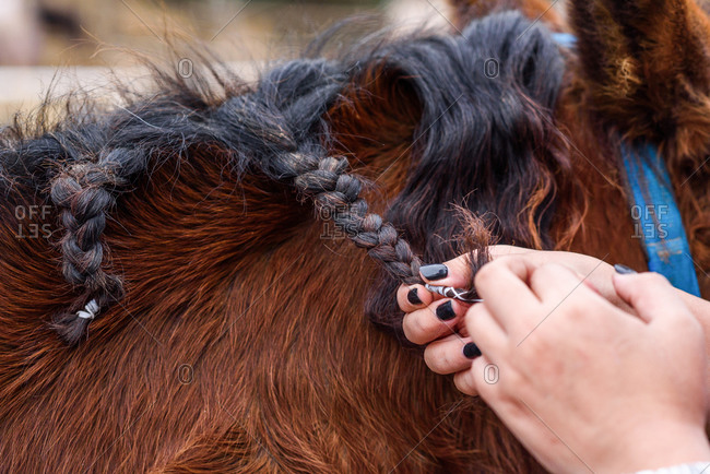 Cropped unrecognizable woman with manicured hands braiding black mane of bay horse while spending time on ranch