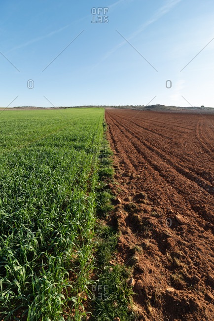 Rural landscape with agricultural field half plowed and half planted under blue sky in sunny day in countryside