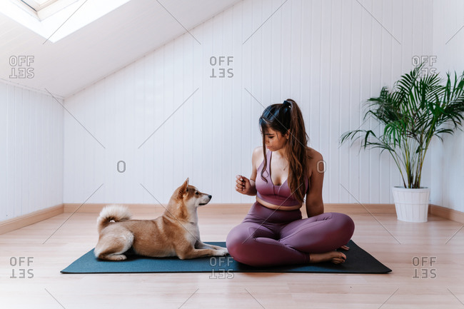 Cute obedient dog and young fit female owner in sportswear sitting together on yoga mat during training at home