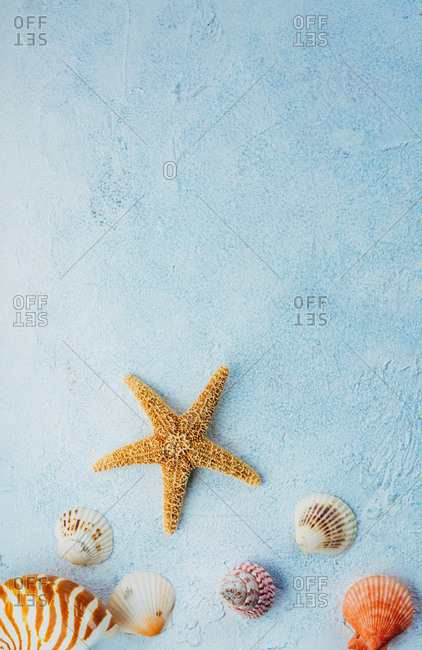 Top view of colorful seashells and dried starfish placed on blue stucco surface on summer day