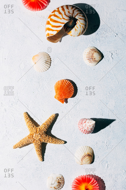 Top view of colorful seashells and dried starfish placed on white stucco surface on summer day