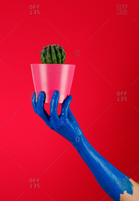 Faceless person with blue painted hand demonstrating flowerpot with green prickly cactus in studio on red background