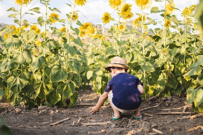 Cheerful little boy in casual clothes and hat sitting in green sunflowers field