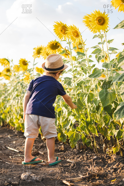 Cheerful little boy in casual clothes and hat standing in green sunflowers field