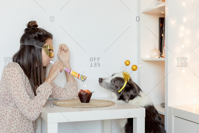 Side view of female with party mask and blower sitting at table with muffin and celebrating birthday with border collie during coronavirus pandemic
