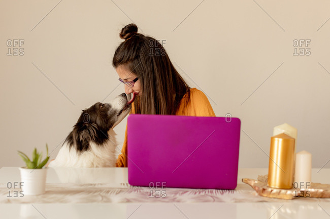 Happy dog licking woman while female working on laptop and sitting at table with candles and potted plant at home during quarantine