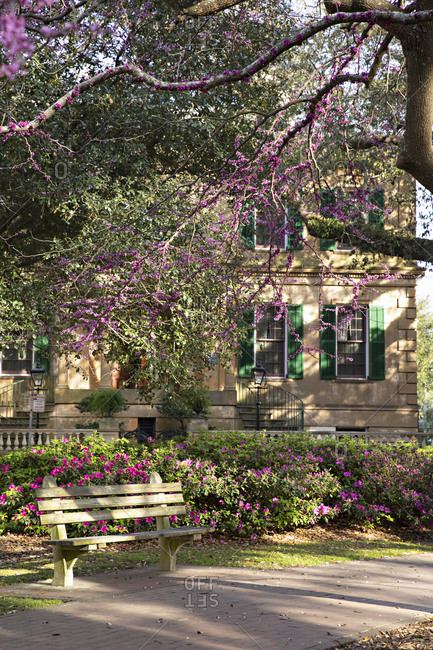 Historic home exterior by city park with purple blooming flowers and blossoming trees in spring