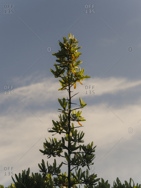 Leafy treetop in front of a cloudy blue sky
