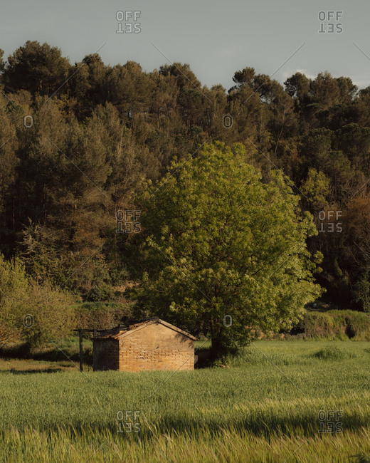 Small brick building beside large tree in a field