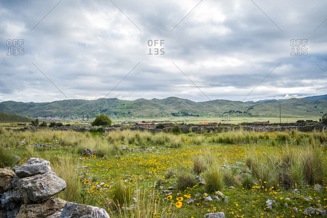 stones near meadow with yellow flowers