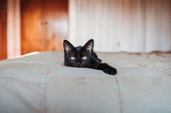 Black kitten resting on a bed
