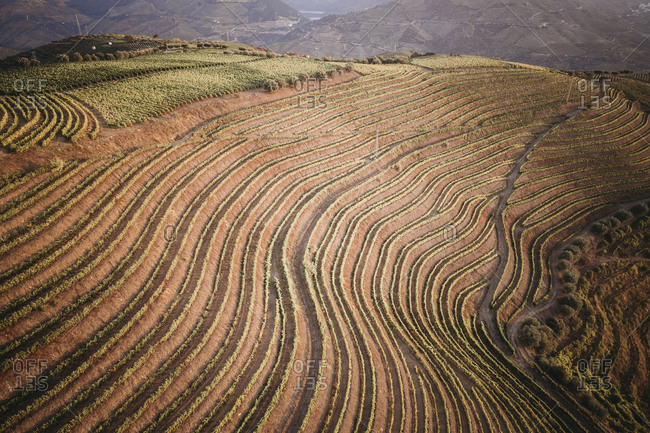 Douro Vineyards from aerial view